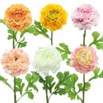 Ranunculus different colors H45cm