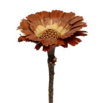 Repens rosette light 8-9cm 25pcs