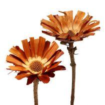 Repens rosette Super 10 - 12cm 20pcs