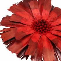 Repens rosette red 8cm - 9cm 25pcs