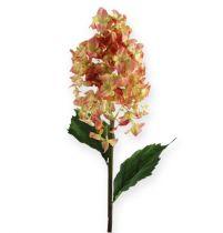 Panicle hydrangea in coral, cream 74cm