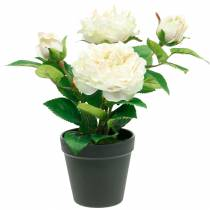 Peony in a pot, romantic decorative rose, silk flower cream white