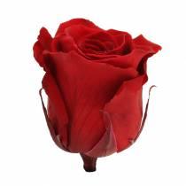 Infinity roses large Ø5.5-6cm red 6pcs