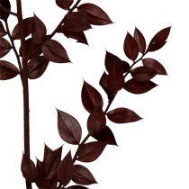 Ruscus twigs dark red 75cm - 95cm 1kg