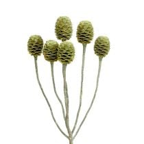 Sabulosum branch 4-6 green frosted 25pcs