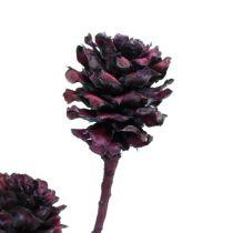 Salignum branches with cones Bordeaux 25pcs