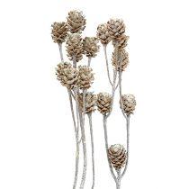 Salignum whitewashed 25pcs