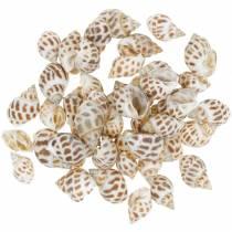 Deco maritime snails nature 1-4cm 1kg