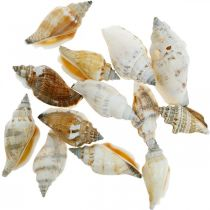 Decorative snail shells empty in a bast net Sea snails 400g