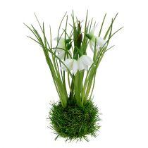 Snowdrop with grass ball 24cm