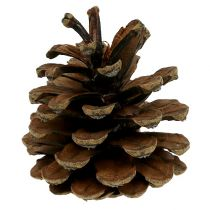 Black pine cones natural 5kg