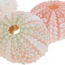 Sea urchin decoration maritime pink, white, green summer decoration 12pcs