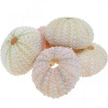 Maritime deco sea urchin housing pink, white scatter deco 55pcs
