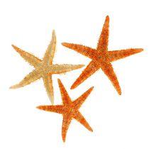Starfish dried 8cm - 10cm 10pcs