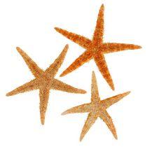 Starfish Mix 8cm - 10cm 50pcs