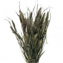 Dried flowers Setaria anthracite natural millet bunch 100g
