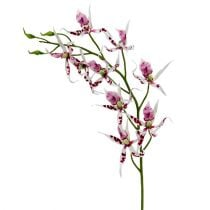 Spider orchids Brassia Pink-White 108cm 3pcs