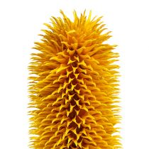 Teasels Pointed natural stems Yellow 1kg
