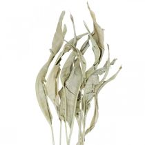 Strelitzia leaves dried green frosted 45-80cm 10pcs