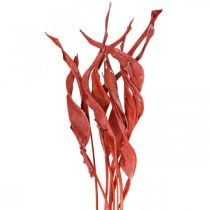 Strelitzia leaves red frosted dry flowers 45-80cm 10pcs