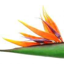 Strelitzia Bird of Paradise flower 95cm
