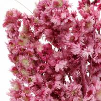 Dried Flowers Pink Dried Flowers Bouquet Dried Flowers Pink H21cm