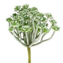 Succulent Echeveria 17cm gray 3pcs
