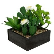 Succulent in wooden box H14cm 1pc