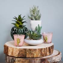 Succulent in the pot 17cm green