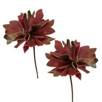 Succulent dark red Ø10cm 12pcs