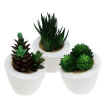 Succulent mix in a pot 9cm - 11cm 3pcs