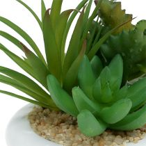 Succulents in the ceramic pot Ø12cm