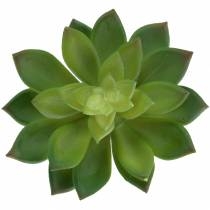 Succulent house root green 14cml