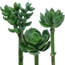 Succulents sorted 11cm 3pcs