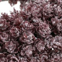Pinecone wreath Ø25cm Burgundy iced