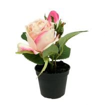 Table decoration Rose in the pot cream 14cm