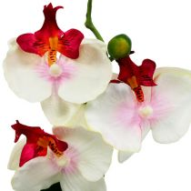 Table decoration orchid in pot cream H29cm