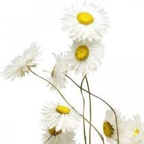 Dried Flowers Acroclinium White Flowers Dried Flowers 60g