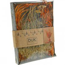 Dried Flowers Box Orange Dried Flowers Set