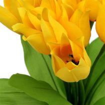 Tulip bush yellow H30cm
