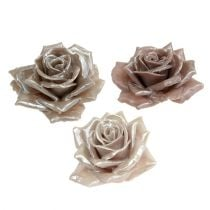 Wax rose champagne mix Ø10cm 6pcs