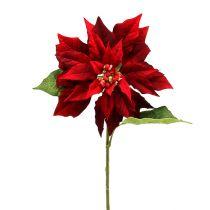Poinsettia red 70cm