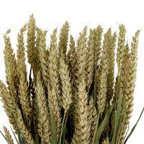 Wheat Bund Natur 1St decorative wheat