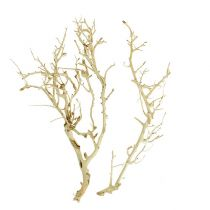 White Bush bleached 5pcs