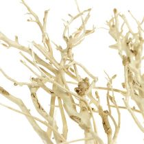 White Bush bleached 5pcs