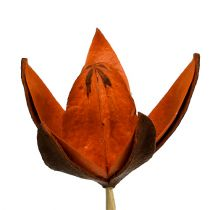 Wild lily on a stick orange 45p