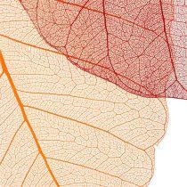 Willow Skeleton orange / red 200pcs.