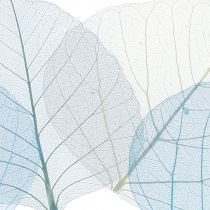 Willow leaves skeletonized blue, gray sorted 200pcs