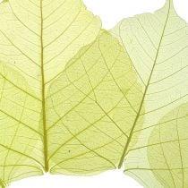 Willow Leaves Skeletonized Yellow Mix 200pcs