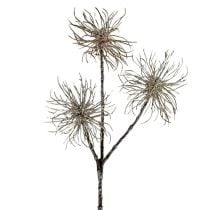 Witch hazel branch champagne 45cm 3pcs